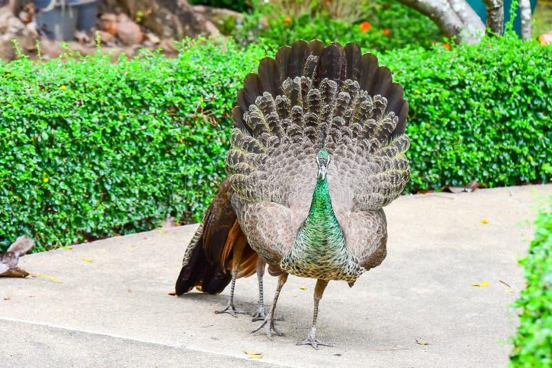 Chai Nat泰国12月26日2019看见在Chai Nat飞禽公园的鸟是chainat省地方  鸟笼是最大的  免版税库存照片
