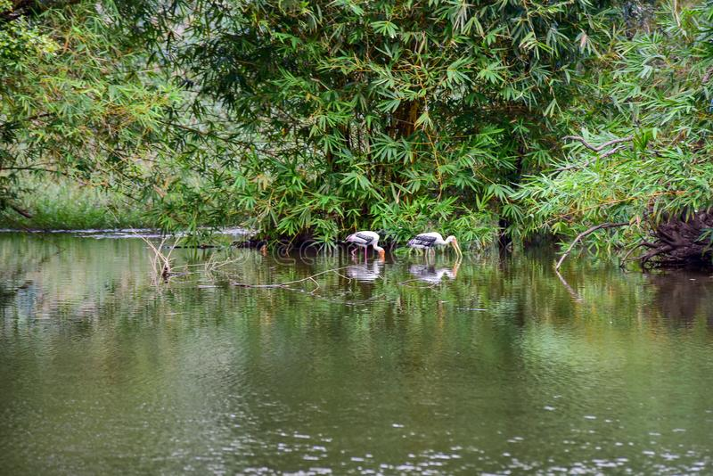 Chai Nat泰国12月26日2019看见在Chai Nat飞禽公园的鸟是chainat省地方  鸟笼是最大的  图库摄影