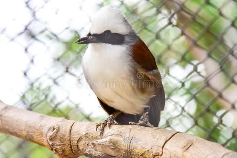 Chai Nat泰国12月26日2019看见在Chai Nat飞禽公园的鸟是chainat省地方  鸟笼是最大的  免版税图库摄影