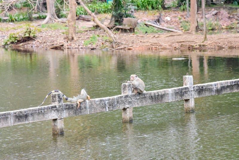 Chai Nat泰国12月26日2019看见在Chai Nat飞禽公园的鸟是chainat省地方  鸟笼是最大的  免版税库存图片
