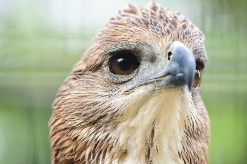 Chai Nat泰国12月26日2019看见在Chai Nat飞禽公园的鸟是chainat省地方  鸟笼是最大的  库存照片