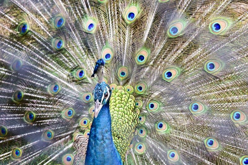 Chai Nat泰国12月26日2019看见在Chai Nat飞禽公园的鸟是chainat省地方  _bird鸟笼是这最大的  库存图片