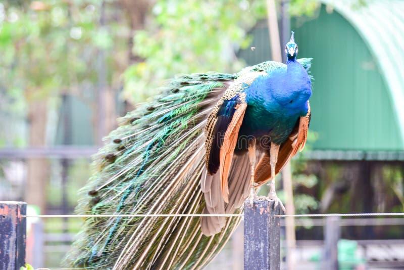 Chai nat Thailand 26 de dezembro de 2019 see bird at Chai NAT Bird Park é um local da província de chainat Gaiola de pássaros é a foto de stock