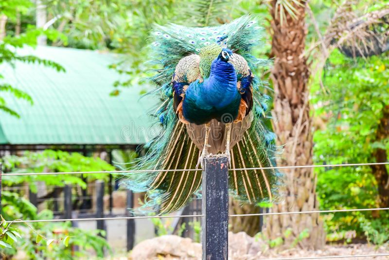 Chai nat Thailand December 26 2019 see birds at Chai NAT Bird Park is a place of chainat province. Bird cage is the biggest in. Asia, covering an area of 26 stock images