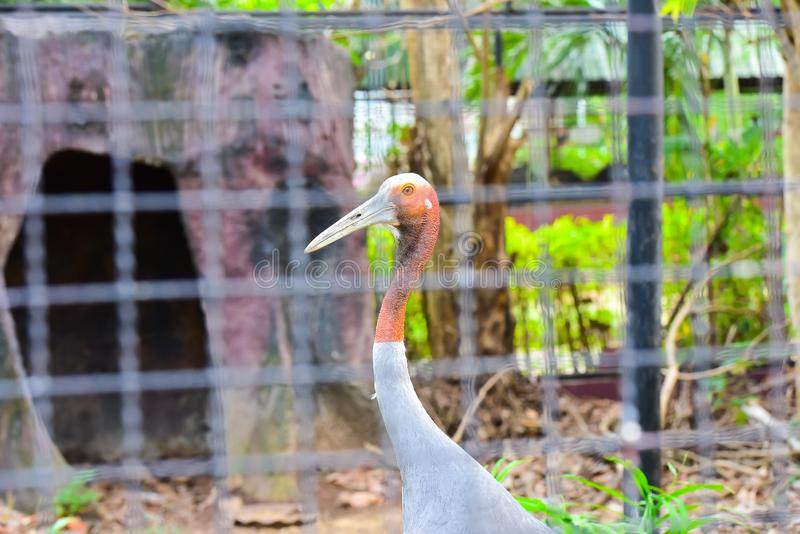 Chai nat Thailand December 26 2019 see birds at Chai NAT Bird Park is a place of chainat province. Bird cage is the biggest in. Asia, covering an area of 26 royalty free stock image