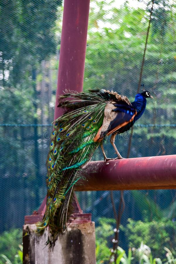 Chai nat Thailand December 26 2019 see birds at Chai NAT Bird Park is a place of chainat province. Bird cage is the biggest in. Asia, covering an area of 26 royalty free stock photo