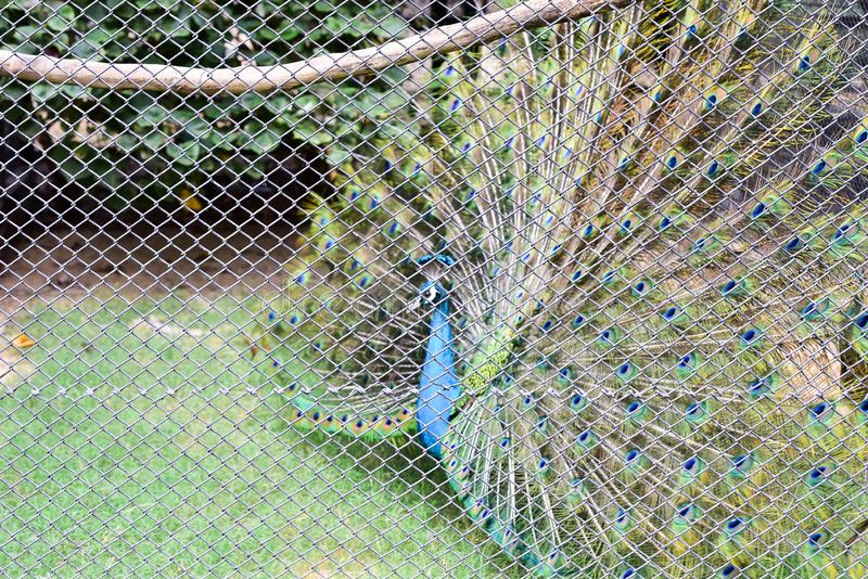 Chai nat Thailand December 26 2019 see birds at Chai NAT Bird Park is a place of chainat province. Bird cage is the biggest in. Asia, covering an area of 26 royalty free stock photos