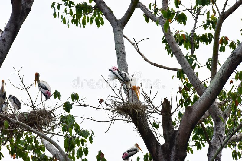 Chai nat Thailand December 26 2019 see birds at Chai NAT Bird Park is a place of chainat province. Bird cage is the biggest in. Asia, covering an area of 26 stock image