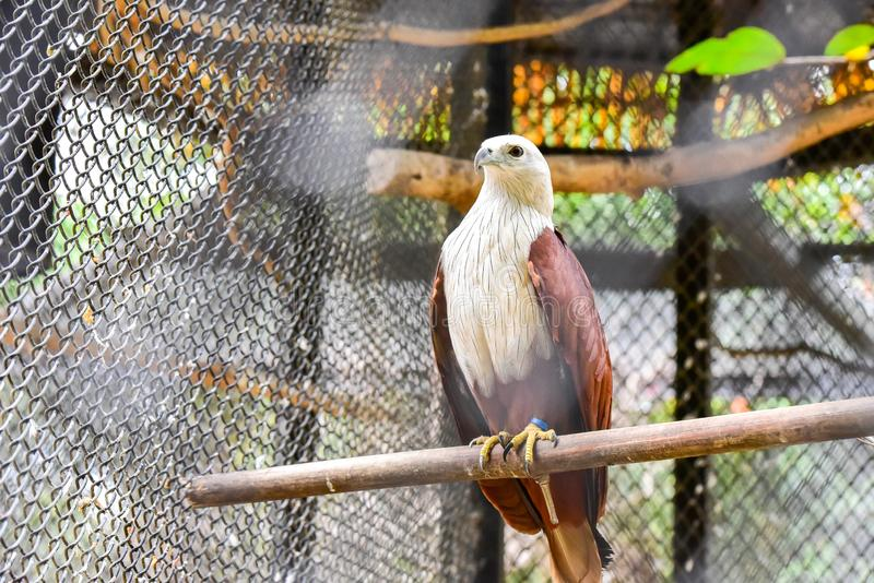 Chai nat Thailand December 26 2019 see birds at Chai NAT Bird Park is a place of chainat province. Bird cage is the biggest in. Asia royalty free stock image