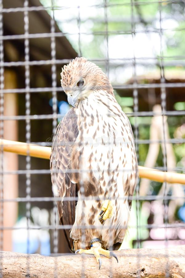 Chai nat Thailand December 26 2019 see birds at Chai NAT Bird Park is a place of chainat province. Bird cage is the biggest in. Asia, covering an area of 26 stock photos