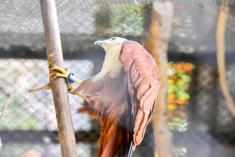 Chai nat Thailand December 26 2019 see birds at Chai NAT Bird Park is a place of chainat province. Bird cage is the biggest in. Asia, covering an area of 26 stock photo