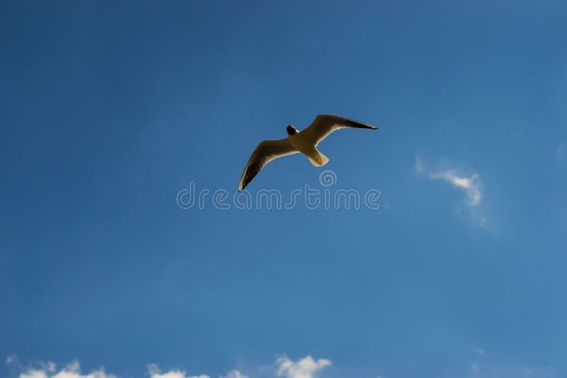 Chaika. stock photography