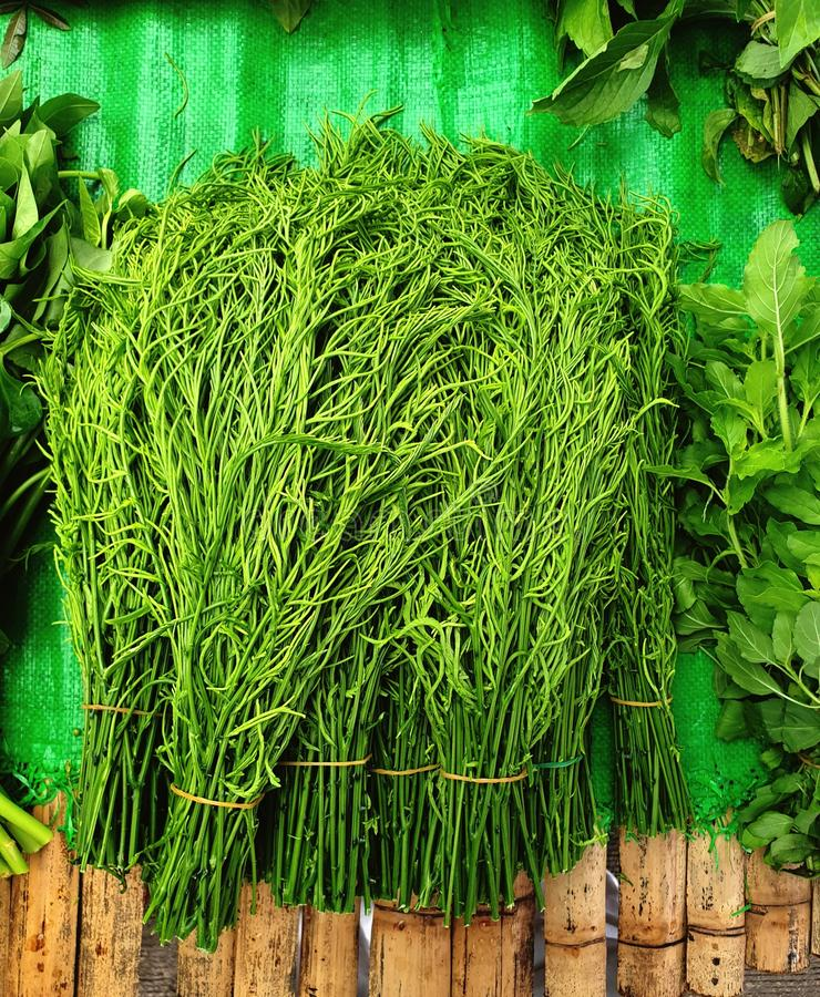 Chaim eller lokal thai grönsak royaltyfri fotografi