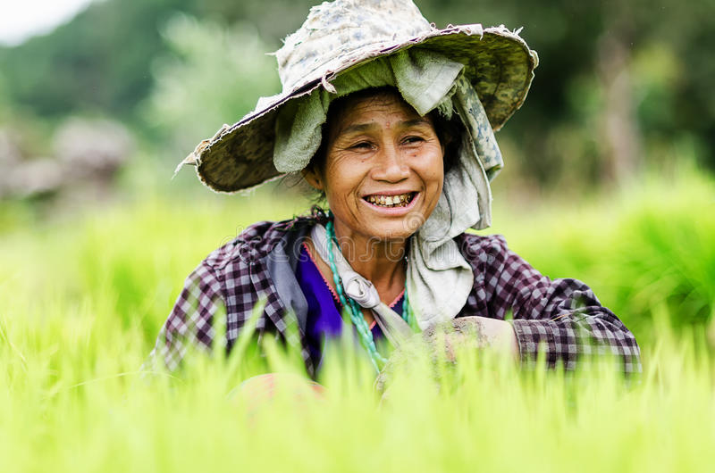 Chaimai, Tailândia o 23 de julho na vila do país, fazendeiros é colheita imagem de stock royalty free