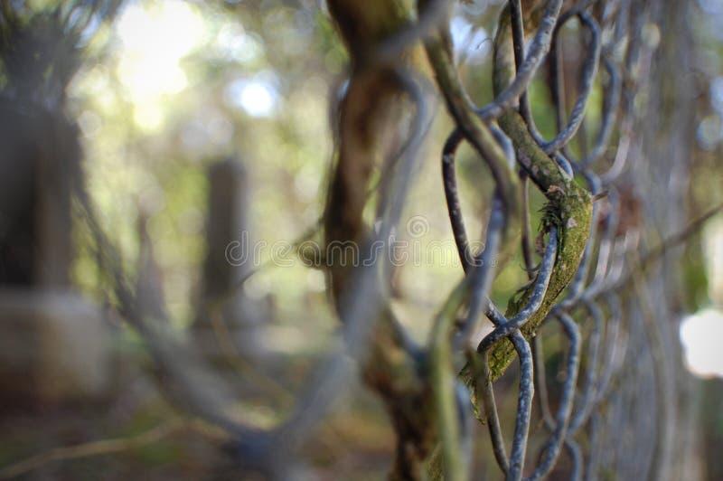 chain fence link 免版税库存照片
