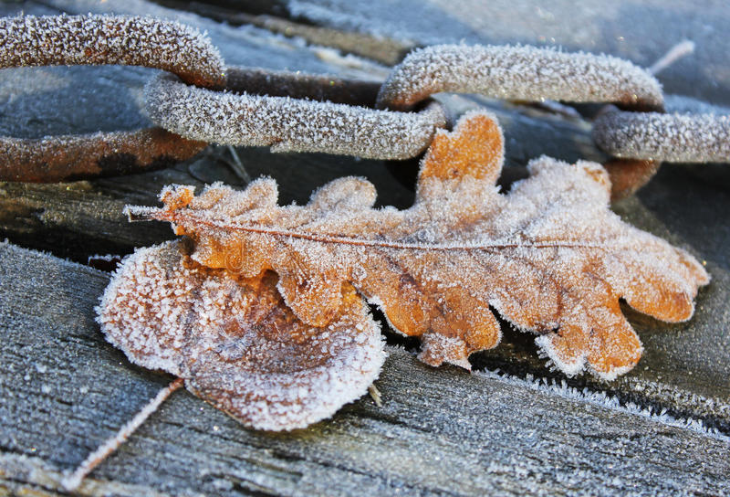 Chain and frosty leaves royalty free stock photos