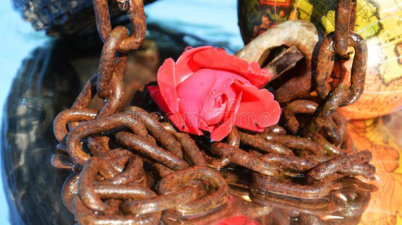 Chain, wheel, globe and integration concept. A red rose imprisoned by chains,a globe reflects in the water, an old wheel, evoking the freedom of speech and royalty free stock image