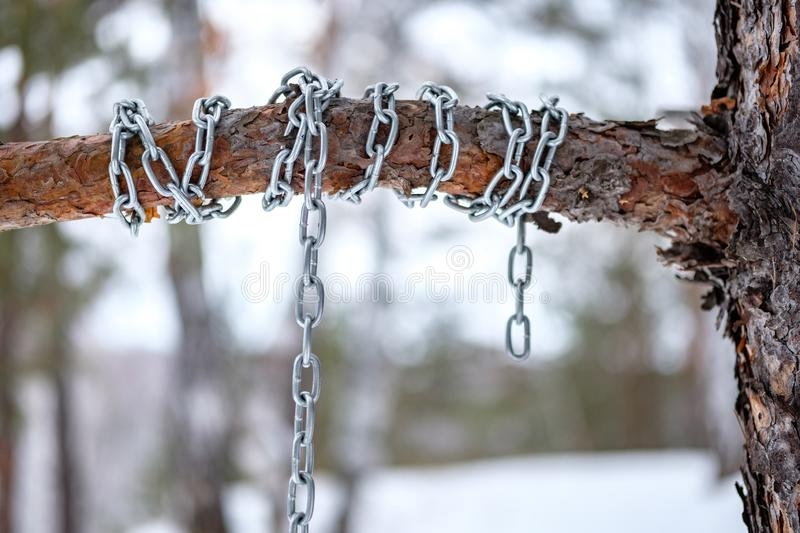 The chain is wound around a pine bitch, winter forest. In the afternoon stock photo
