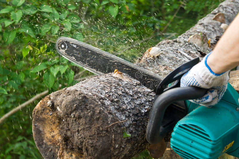 Chainsaw. Man sawing the log of birch with chainsaw royalty free stock photo