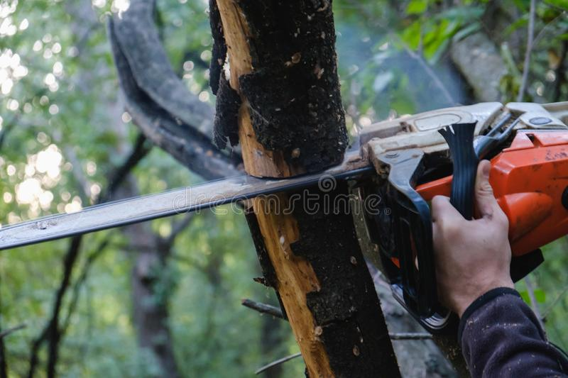 Chainsaw. Close-up of woodcutter sawing chain saw in motion, sawdust fly to sides stock images