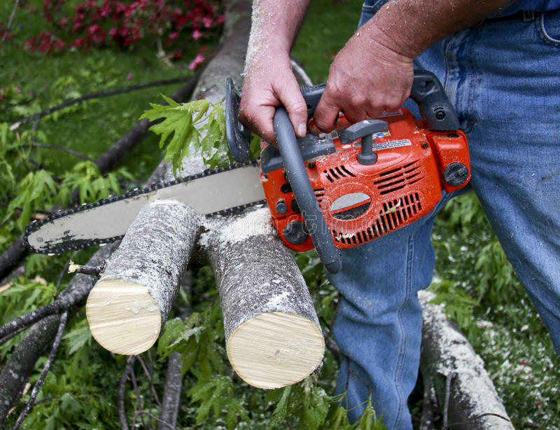 Chainsaw cutting branches. Chainsaw cutting fallen tree branches stock images