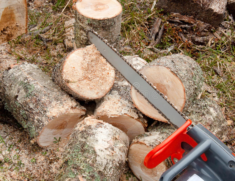 Chainsaw cutting wood. Logs on slises stock images