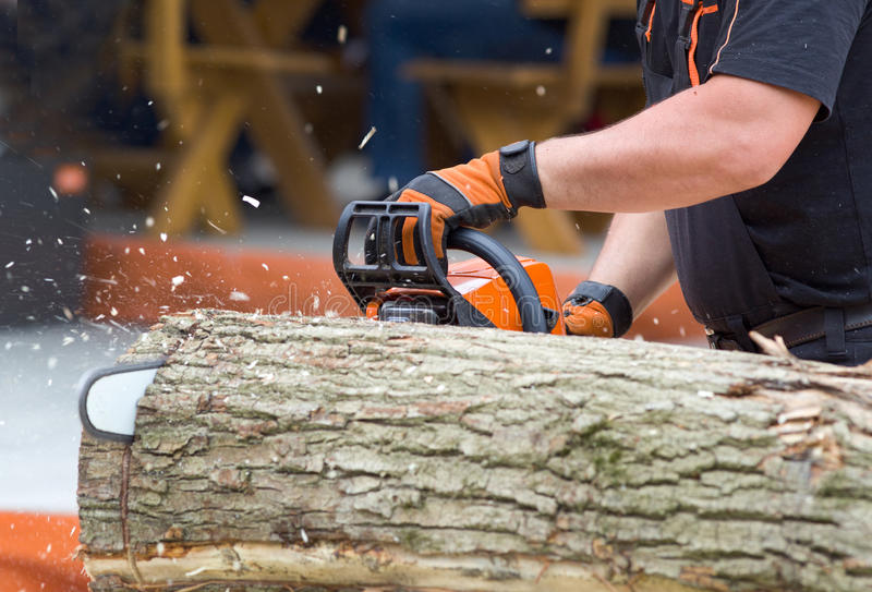 Chainsaw cutting wood. Close up of male hands cutting trunk with chainsaw stock image