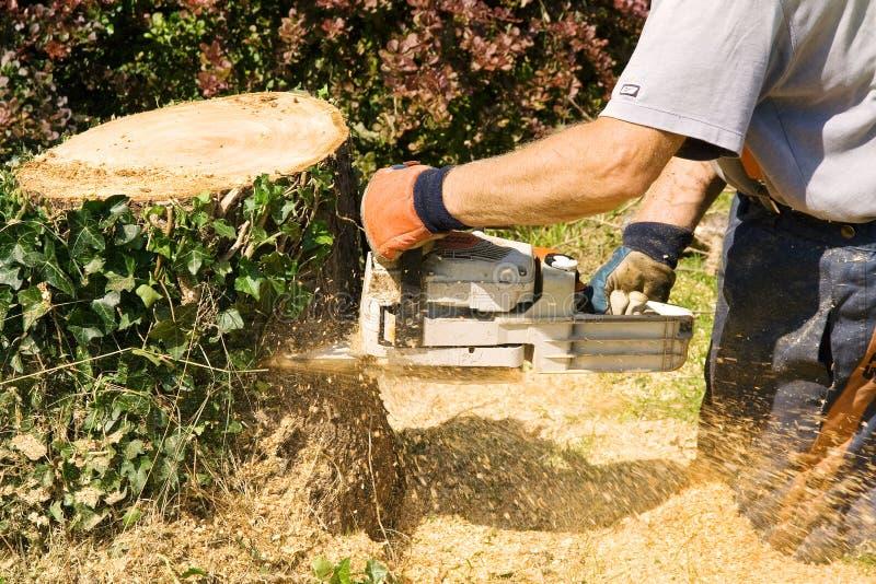 chainsaw korzenia zdjęcia stock