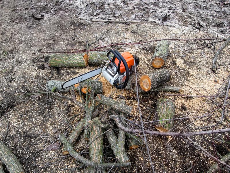 Chainsaw lies on ground among logs and sawdust, top view. Concept of spring and autumn rejuvenation of the garden, a chainsaw. Among the branches and pieces of royalty free stock photos