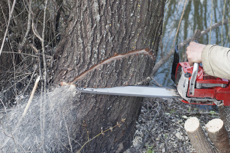 Chainsaw. Man cutting trees. In forest stock photos