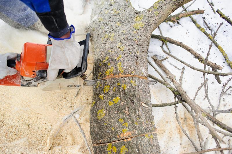 Chainsaw in motion, sawdust fly to sides. Wood felling, deforestation, action, adult, arborist, axeman, cut, danger, equipment, feller, firewood, hand, human stock photo