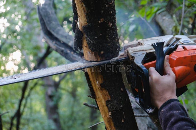 chainsaw Primo piano della motosega nel moto, mosca di sawing del taglialegna della segatura ai lati immagini stock
