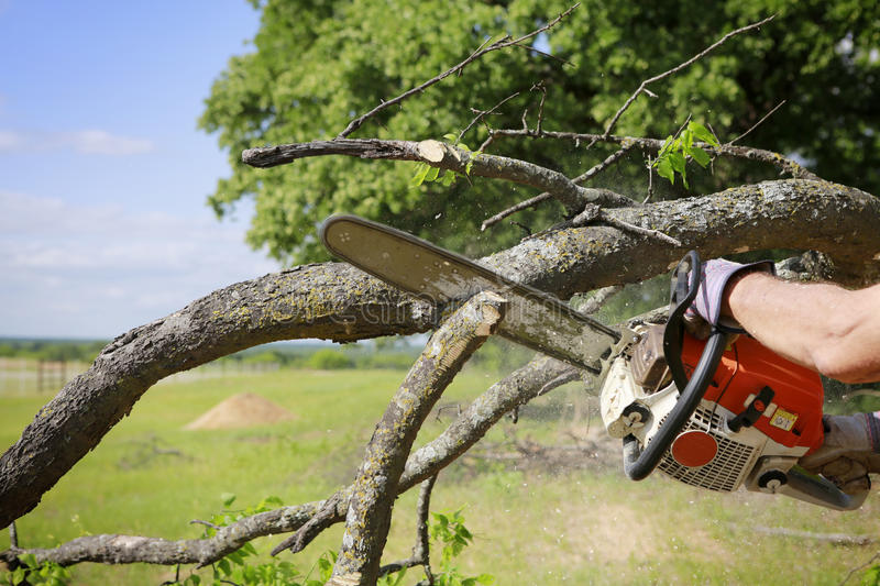 Chainsaw. Professional is cutting trees using an electrical chainsaw royalty free stock photos