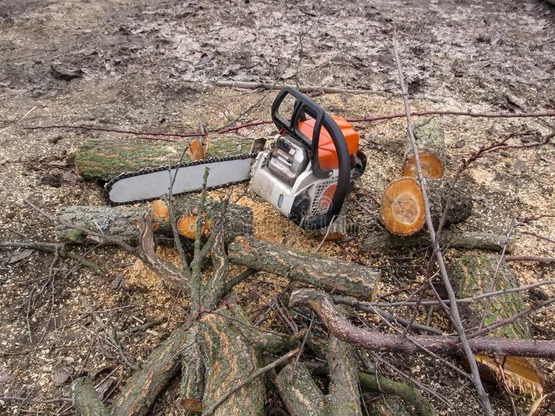 Chainsaw stands on the black bare ground among the pieces of a tree trunk. Fresh logs lie on the ground among the sawdust,. Beautiful background with a copy stock image