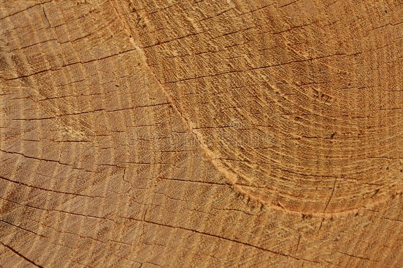 Chainsaw trace on the tree. Trunk royalty free stock images