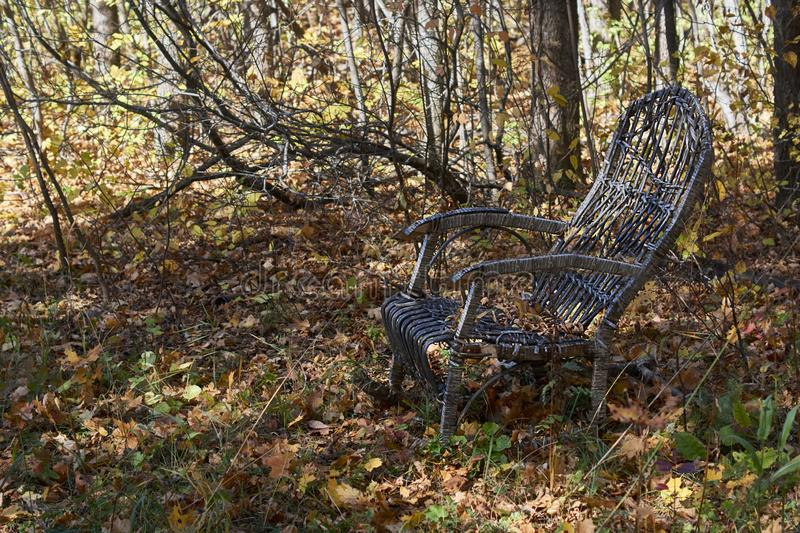 The chair in the autumn garden  with yellow leaves stock photography
