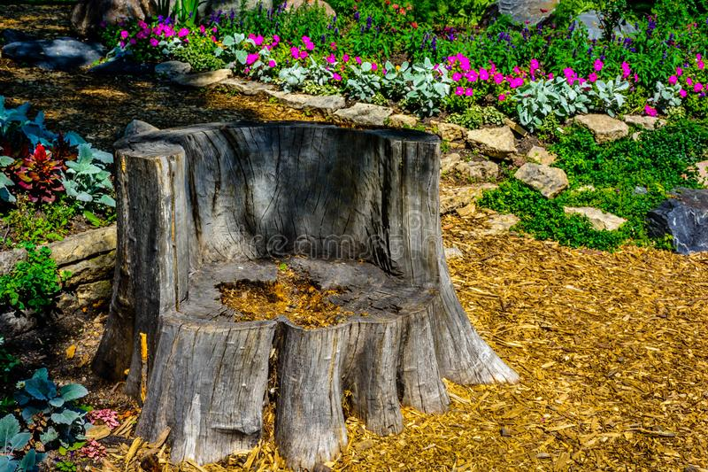 Chair fashioned from ancient tree trunk. royalty free stock photography