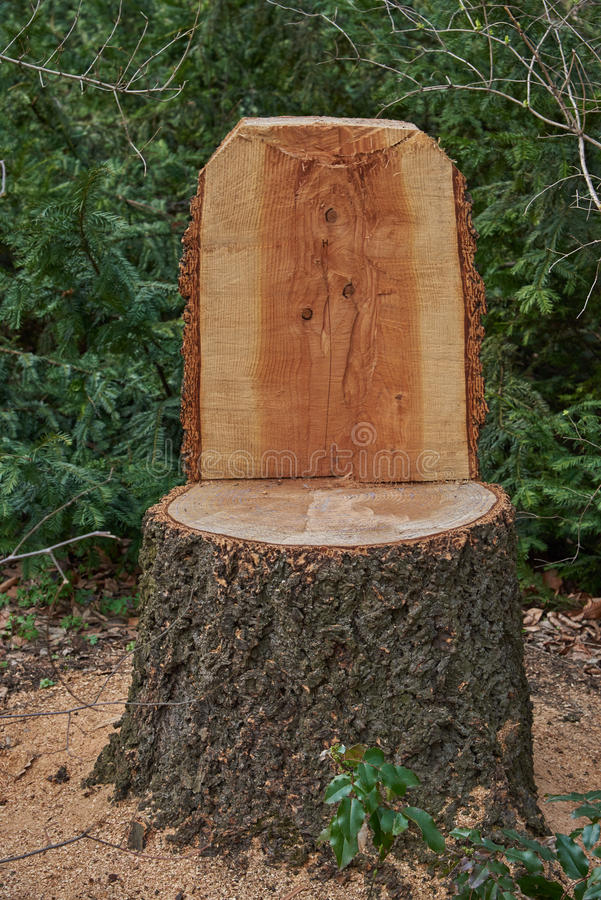 Download A Chair Made From A Single Tree Stump Stock Photo   Image Of Chair,