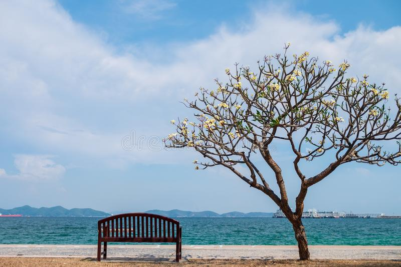 chair sat down in the shade of tree to rest and see the sea ahead royalty free stock photography