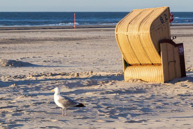 Chaise de mouette et de plage sur Juist photo libre de droits