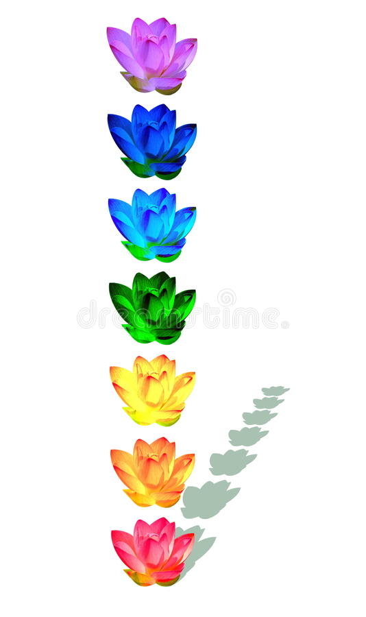 Chakra colors of lily flowers. Chakra colors of lily flower in a column with their shadow in white background vector illustration