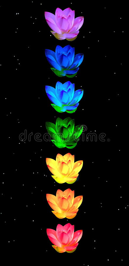 Chakra colors of lily flowers. Chakra colors of lily flower in a column in night background stock illustration