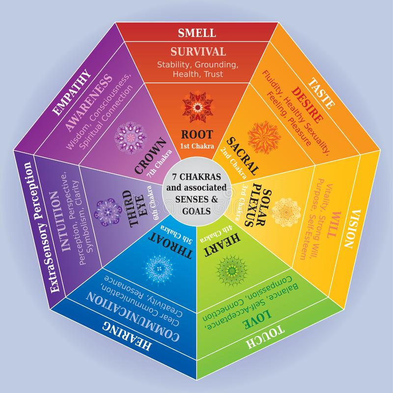 7 Chakras Color Chart with Mandalas, Senses and associated Meanings. Each Chakra is depicted with its Associated Sense. May be used with a Pendulum vector illustration