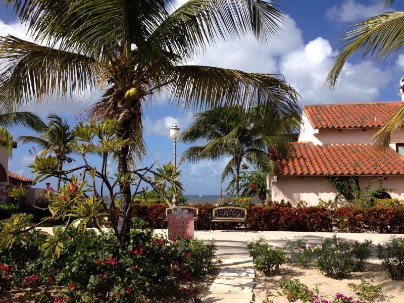 Chalet Anguila de las palmas del hotel fotos de archivo libres de regalías