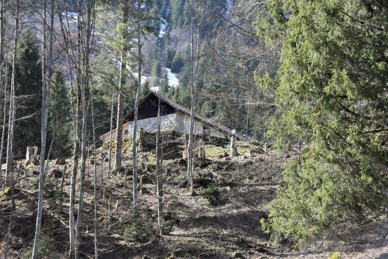 Chalet bland barrträd nära sjön Klöntalersee arkivfoton
