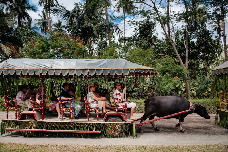 Chalet Escudero, Tiaong, San Pablo, Filipinas del paseo del carro del carabao foto de archivo