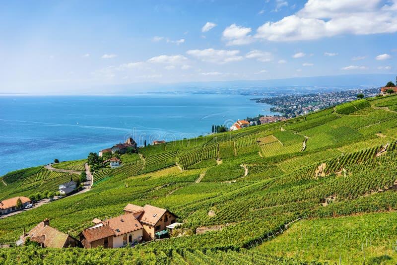 Chalet nära Lavaux vingårdterrasser som fotvandrar slingan Schweiz royaltyfria bilder