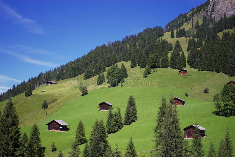 Chalets on Alps mountains. Scenic view of chalet homes on green wooded Alpine mountainside in summer stock photos