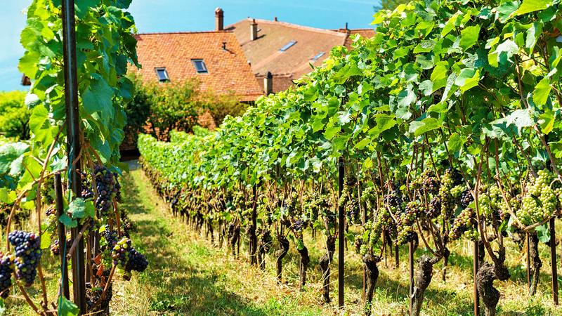 Chalets and Lavaux Vineyard Terraces hiking trail Lavaux Oron Sw. Chalets and Lavaux Vineyard Terraces hiking trail, Lavaux-Oron district, Switzerland stock image