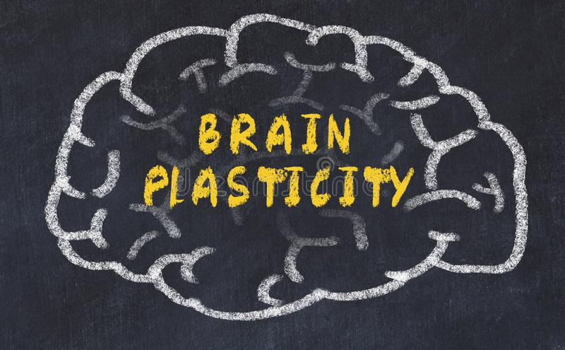 Chalk drawing of human brain with inscription brain plasticity.  stock photography